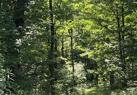 Land For Sale In Redfield NY Land From Land And Camps