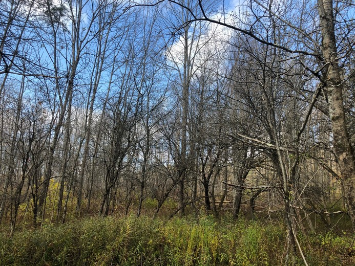 NY hunting land for sale Pharsalia NY
