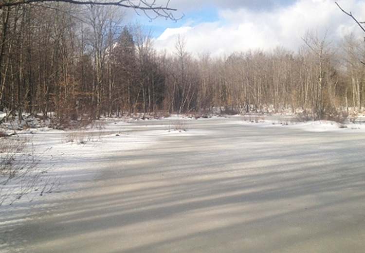 thumbnail image of ny hunting land for sale image of frozen pond and trees at finnegan pond