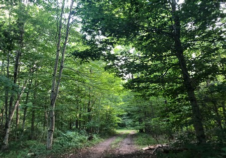 land camp for sale osceola ny