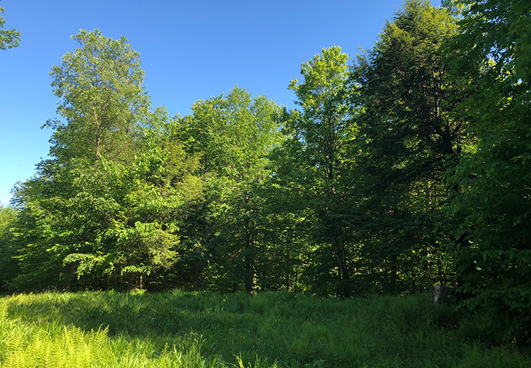 Waterfront Land For Sale Oneida County Ny Acreage From Land And Camps