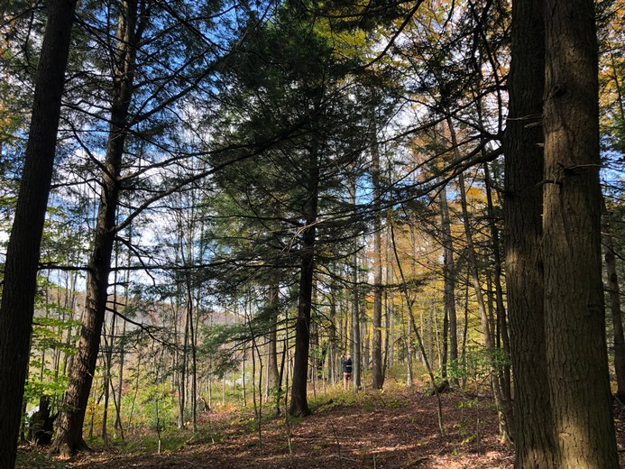 NY land for sale in Redfield NY