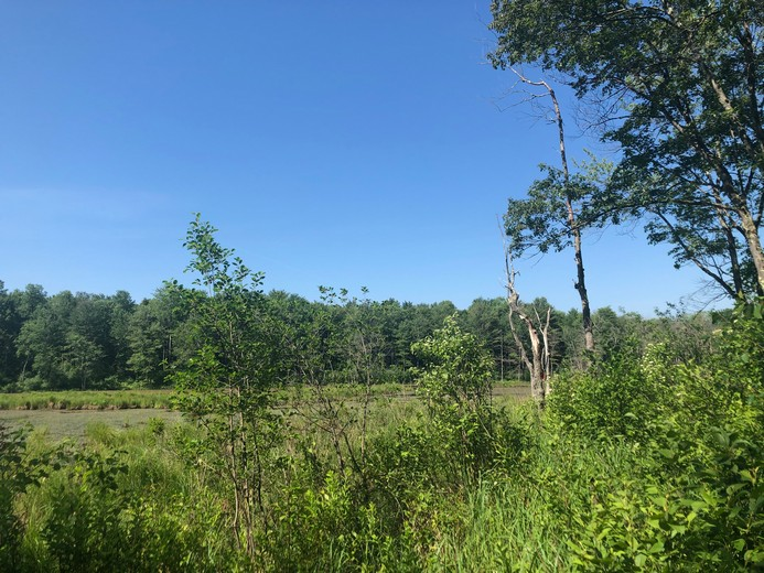 ny waterfront land for sale williamstown ny