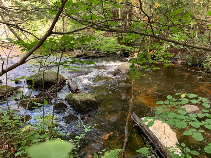 Hunting Land For Sale Ny Creek From Land And Camps