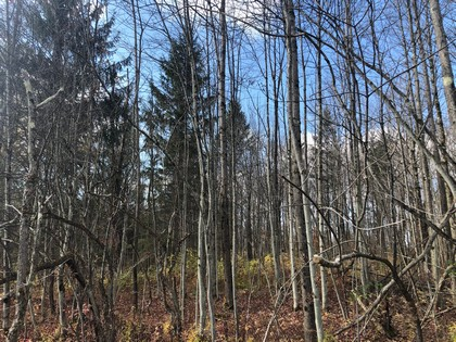 NY state forest land for sale in Pharsalia, NY