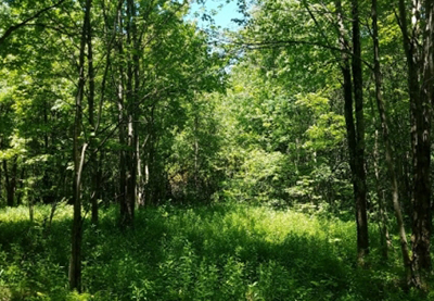 8 acres of land for sale near old forge ny from land and camps