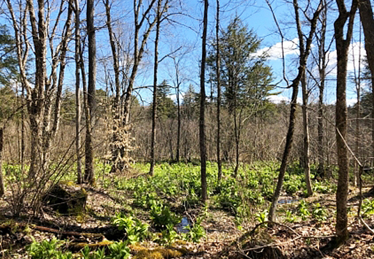 hunting land for sale in williamstown ny ohara forest camp lot image of land and trees from land and camps