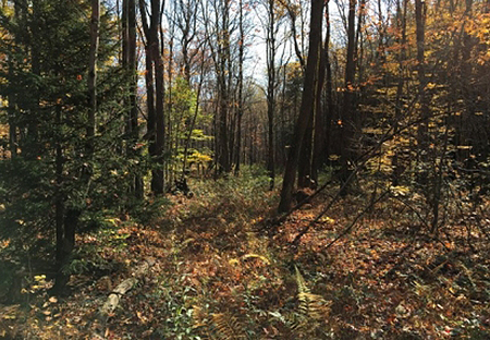 hunting land for sale near lewis ny land point rock woodlands from land and camps