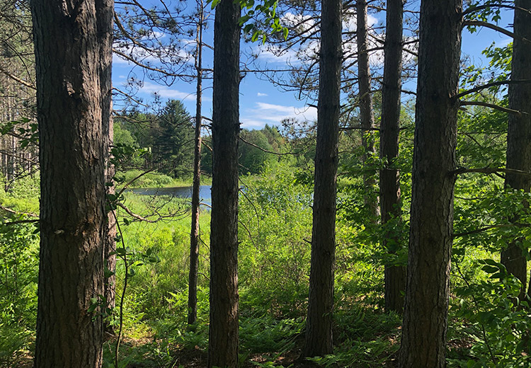 Waterfront Land For Sale Oneida County Ny Trees From Land And Camps