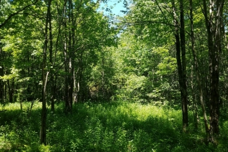 thumbnail image of land for sale in steuben ny mcdonald woodlands