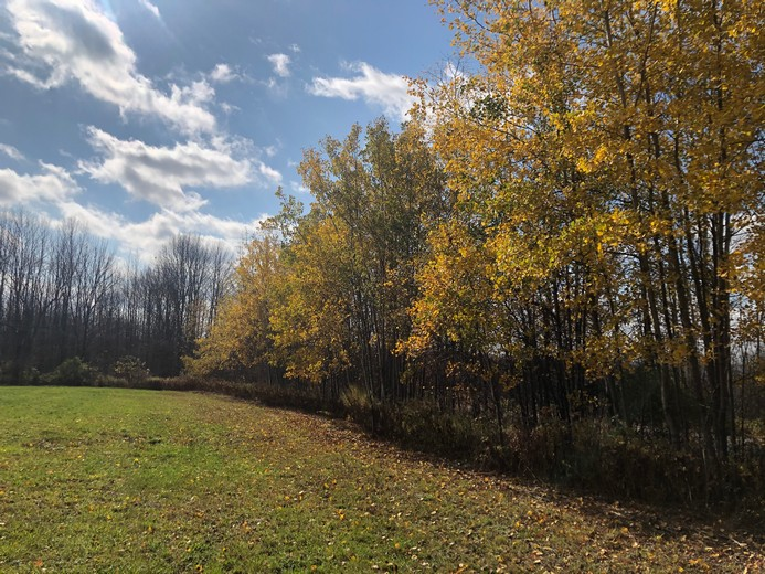 NY land for sale southern tier ny