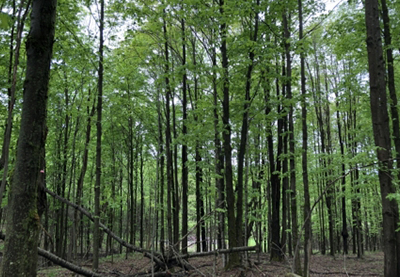 deer hunting land for sale ny curtiss woods from land and camps