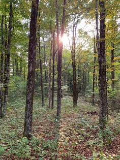 NY land for sale in Florence NY