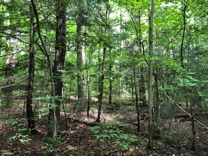 hunting land for sale cortland county ny from land and camps