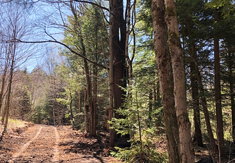 thumbnail land for sale near salmon river image of trees and land walk to mad river