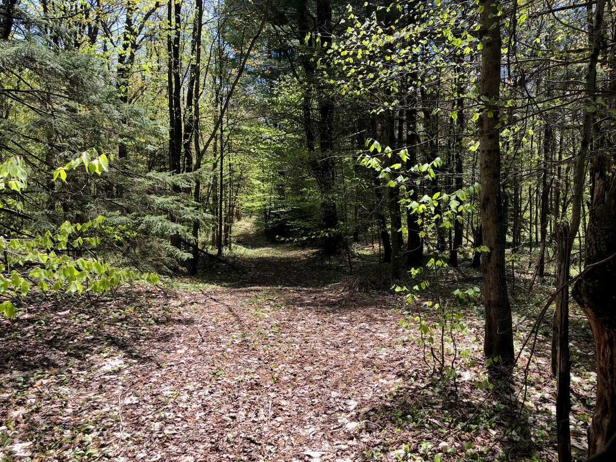 Land and camp for sale in Redfield NY
