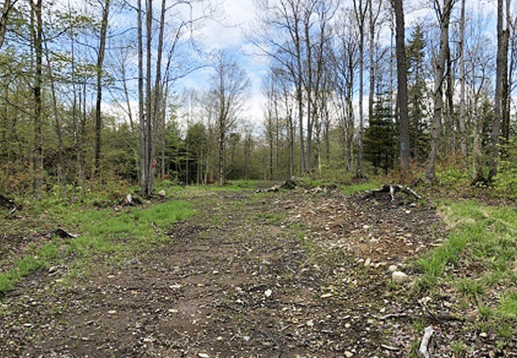 Land for Sale Lewis County NY Kirk Road Woods Thumbnail from Land and Camps
