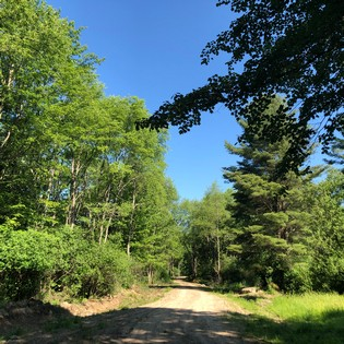 ny land for sale in williamstown ny