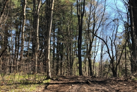 hunting land for sale in williamstown ny bartley acres image of land and trees from land and camps