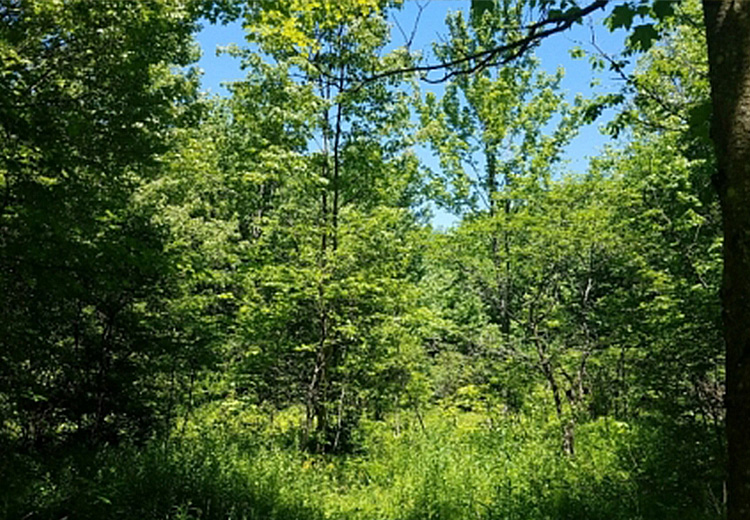 thumbnail of 8 acres of land for sale near old forge ny image of greenery and trees