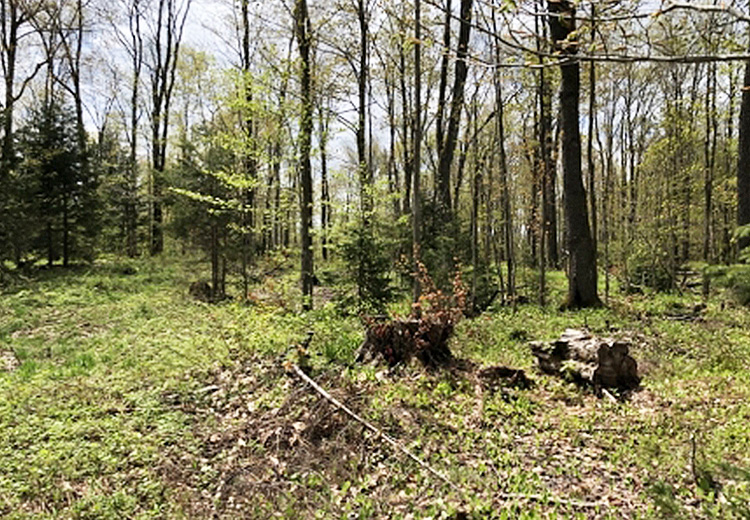 Land For Sale Lewis County Ny From Land And Camps