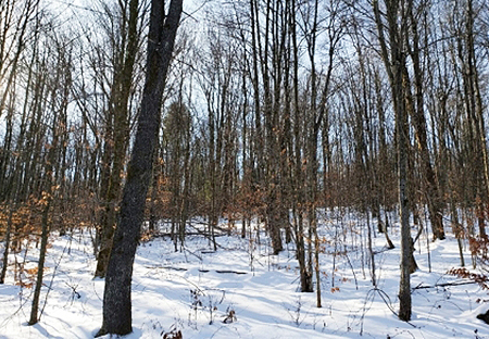 Camps For Sale NY Lincklaen NY Large Land From Land And Camps