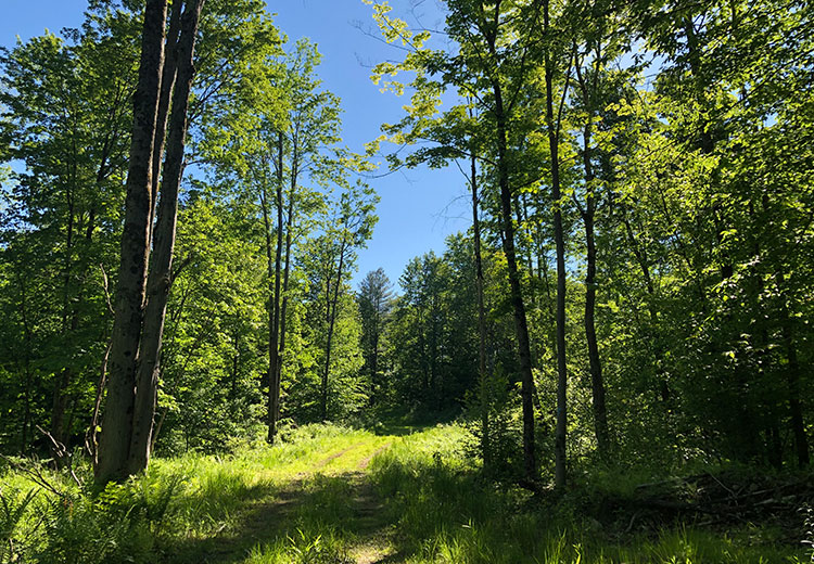 Waterfront Land For Sale Oneida County Ny Trail From Land And Camps