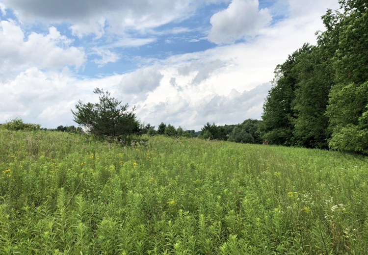 Southern tier land for sale in Harford NY