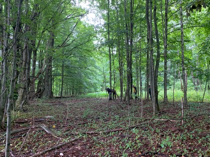 NY hunting land for sale in Steuben NY