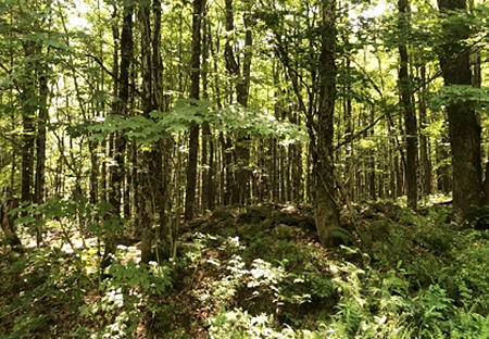 Hunting Property For Sale Oswego County Ny Thumbnail From Land And Camps