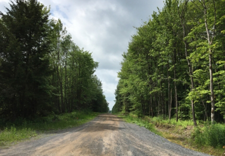 ny hunting land for sale borders east osceola state forest from land and camps