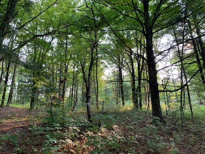 NY hunting land for sale in Florence NY