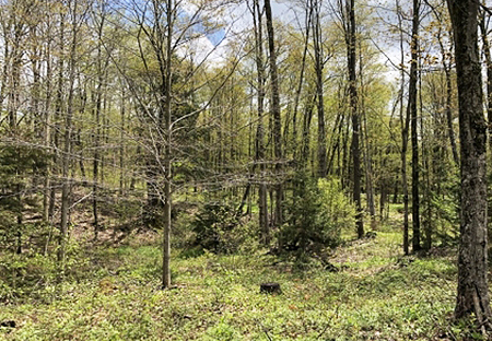 Land For Sale Lewis County Ny Hunting Land From Land And Camps