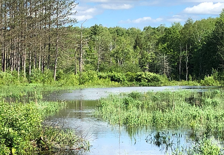 Waterfront Land For Sale Oneida County Ny Canoe From Land And Camps