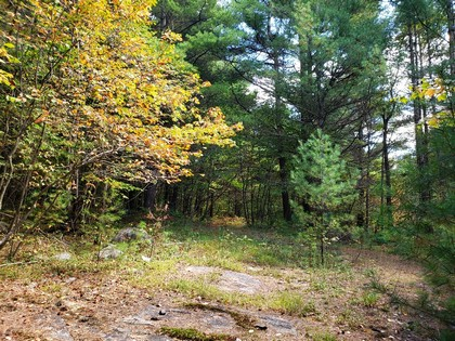 ny hunting land for sale in diana ny