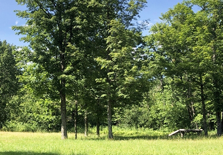 Land for Sale in Redfield NY Thumbnail from Land and Camps