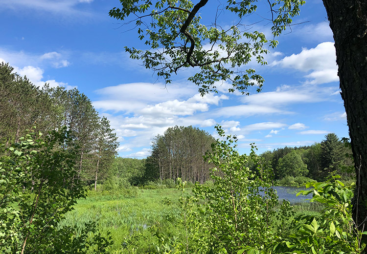 Waterfront Land For Sale Oneida County Ny Land From Land And Camps