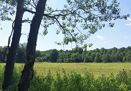 Large Acreage Land For Sale From Land And Camps