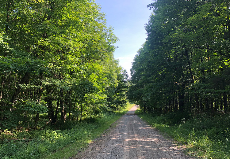20 Acres for Sale Oswego County NY from Land and Camps