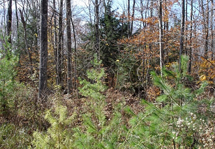 thumbnail image of tug hill land for sale image of trees and woods borders tug hill state forest