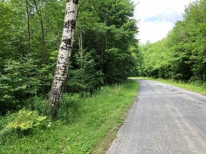 hunting land for sale in hardford ny near kennedy state forest image of land and trees from land and camps