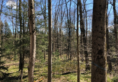hunting land for sale in williamstown ny ohara forest from land and camps
