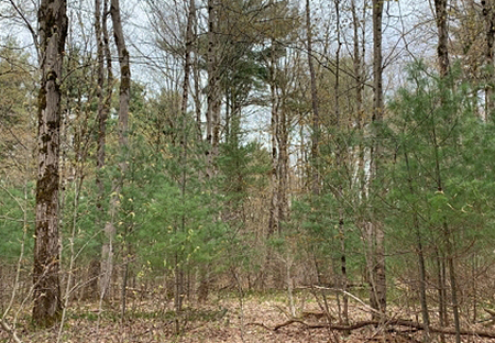 new land for sale near vienna ny from land and camps
