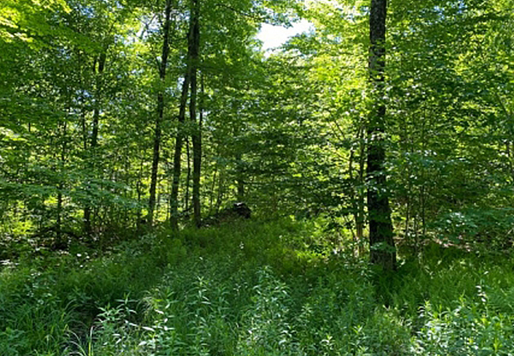50 acres for sale near salmon river image of trees and paved road borders chateaugay state forest