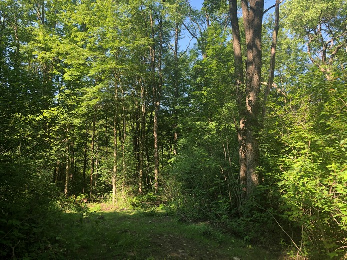 upstate ny land for sale in williamstown ny