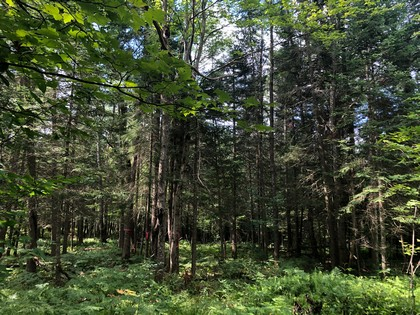 Adirondack land for sale in Forestport, NY