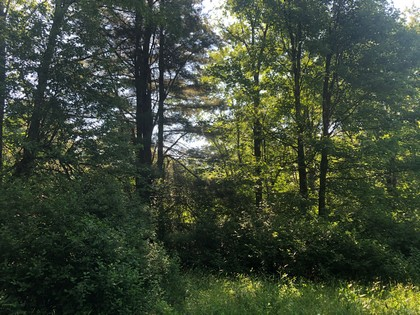ny hunting land for sale in williamstown ny