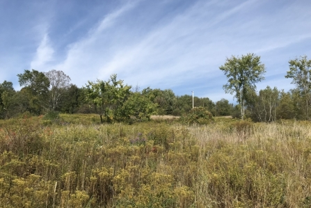 hunting land for sale in florence ny sunset views image of land and trees from land and camps