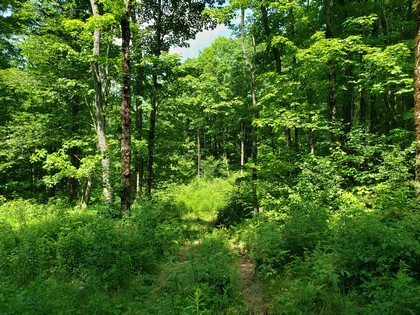 NY hunting land for sale in Redfield NY