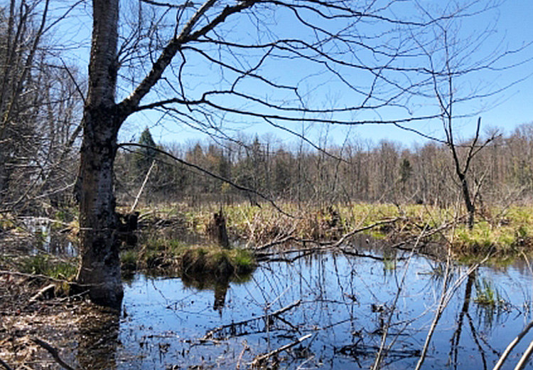thumbnail image of new land for sale in williamstown ny image of land trees and water from land and camps